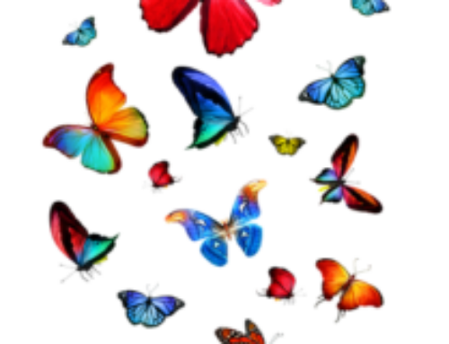 Learn to embrace the butterflies in your tummy when creating change in your life